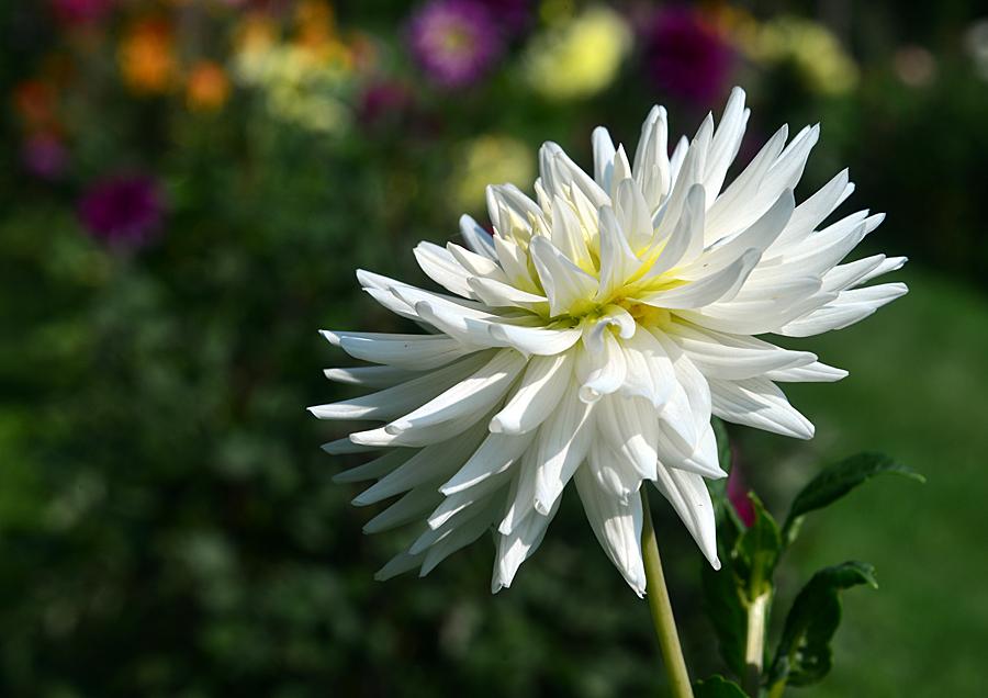 Kliknij obrazek, aby uzyskać większą wersję  Nazwa:kwiat1_4153f.jpg Wyświetleń:53 Rozmiar:473,4 KB ID:29325