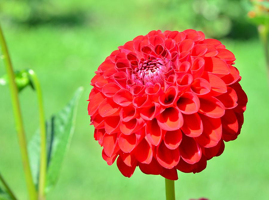 Kliknij obrazek, aby uzyskać większą wersję  Nazwa:kwiat3_4162f.jpg Wyświetleń:53 Rozmiar:579,5 KB ID:29327