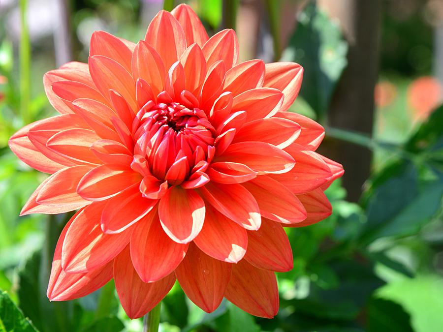 Kliknij obrazek, aby uzyskać większą wersję  Nazwa:kwiat4_4170f.jpg Wyświetleń:53 Rozmiar:626,6 KB ID:29328