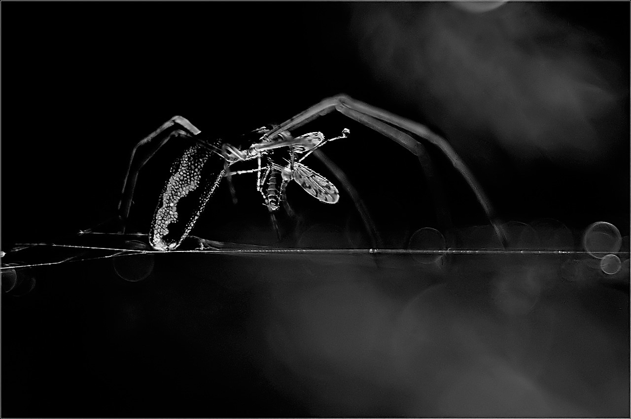 Kliknij obrazek, aby uzyskać większą wersję  Nazwa:pająk.jpg Wyświetleń:157 Rozmiar:187,9 KB ID:43197