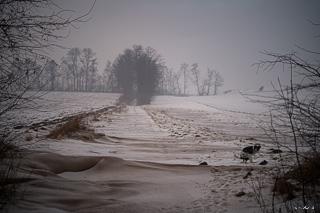 Kliknij obrazek, aby uzyskać większą wersję  Nazwa:_WPK4989 Landscape number whlz 320.jpg Wyświetleń:131 Rozmiar:51,2 KB ID:48708
